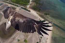 aguila vista desde un dron